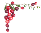 1435596174 cranberry seed oil image 170x140