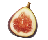 1394227557 fig extract image 170x140